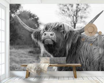 Schotse hooglander van Bianca Scholten