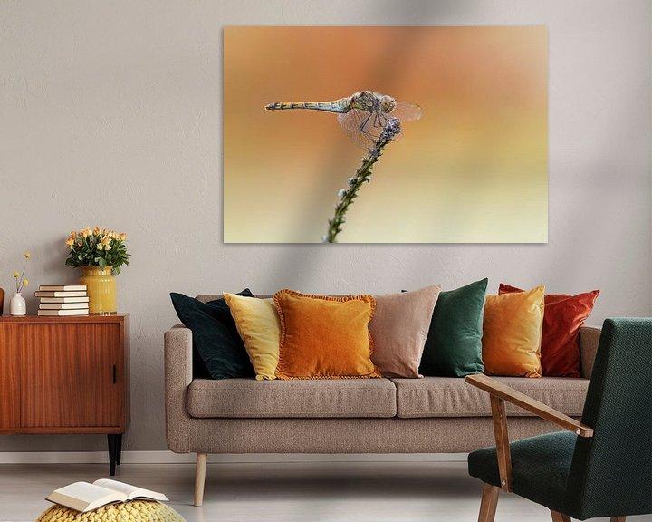Beispiel: Libellen von Heiko Lehmann
