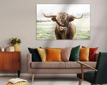 Schotse hooglander stier van Rosalie Oosterom