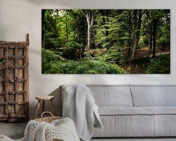 Naturbild eines niederländischen Parks mit alten Bäumen und Gräben von MICHEL WETTSTEIN