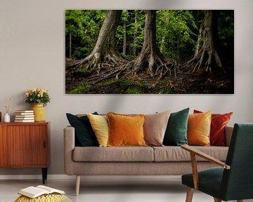 Naturbild von alten Bäumen in einem typisch niederländischen Park von MICHEL WETTSTEIN
