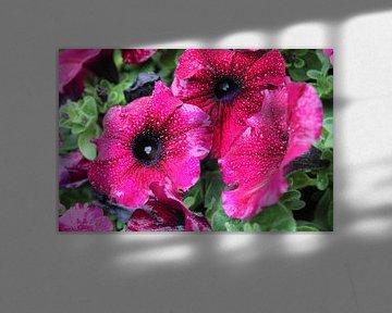 Bloemen von Jeroen Meijer