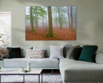 Mistige ochtend in het Leuvenumse bos op de Veluwe van Sjoerd van der Wal