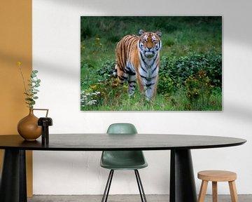 Tiger von Pieter van Dijken