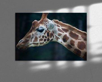 Giraffe van Pieter van Dijken