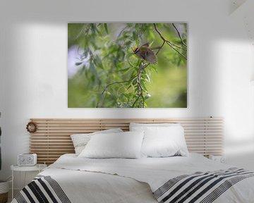 Vuurgoudhaantje (Regulus ignicapilla) van Eric Wander