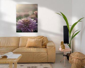 Chrysantheme am Morgen von Martijn Wit