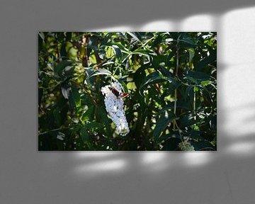 Schmetterling von Susanne Seidel