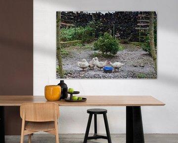 Bauernhof Idylle mit Gänsen von Susanne Seidel