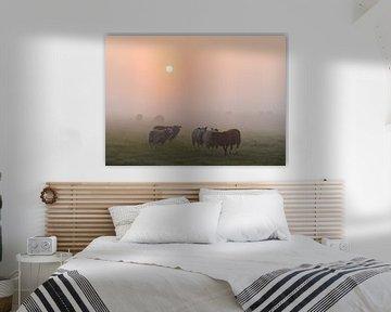 Atmosphäre unter den Schafen von Tania Perneel
