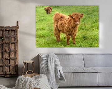 Rood bruine Schotse hooglander runder kalf in de wilde natuur in het gras van Trinet Uzun