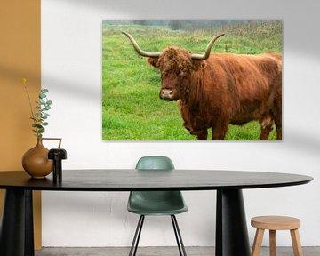 Rood bruine Schotse hooglander runderen in de wilde natuur in het gras van Trinet Uzun