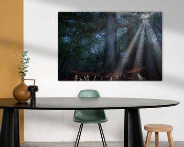 Paddestoelen bos van Claudia De Vries