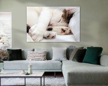 Un beau chat blanc