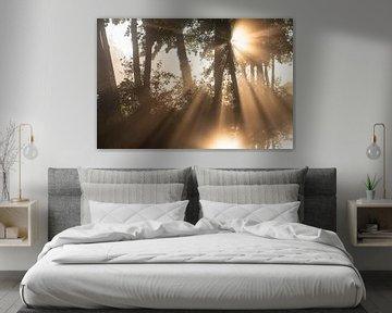 Die Sonne scheint wunderschön durch die Bäume von Michel Geluk