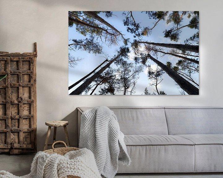 Sfeerimpressie: Hoge bomen vangen veel zon van Ken Huysmans