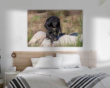 Gorillababy bekommt Hilfe von Anjella Buckens