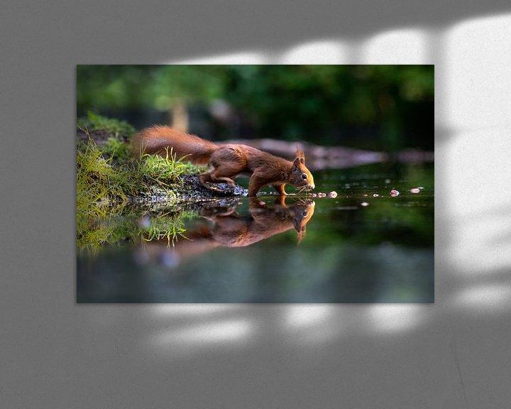 Beispiel: Eichhörnchen mit Reflexion von Anjella Buckens