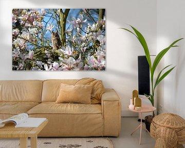 Bemerkenswerte Waldohreule in einer blühenden Magnolie von Susanne Pieren-Canisius
