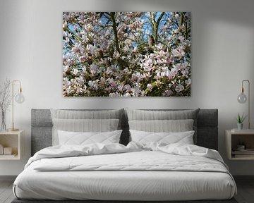 Familie Waldohreule in einer wunderschön blühenden Magnolie von Susanne Pieren-Canisius