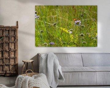 Wildblumen mit Schmetterling von Susanne Seidel