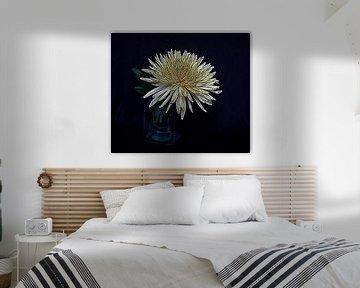 Chrysantheme von Jose Lok
