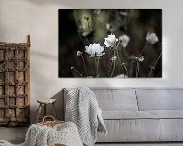 Blumen Teil 6 von Tania Perneel