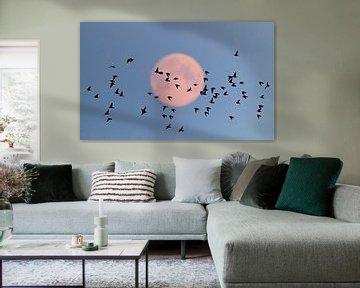 Spreeuwen (Sturnus vulgaris) met volle maan van Beschermingswerk voor aan uw muur