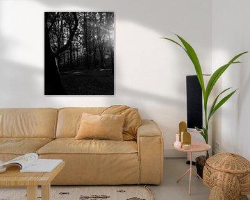 door de bomen het licht zien van Petra Vermunt
