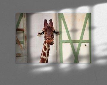 Lustige Giraffe von Angelica Bouwmeester