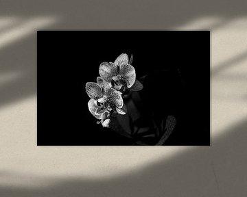Orchidee mit Tropfen von Eveline Hellingman