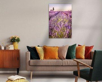Lavendelfeld auf dem Plateau de Valensole, Provence, Frankreich von Christian Müringer
