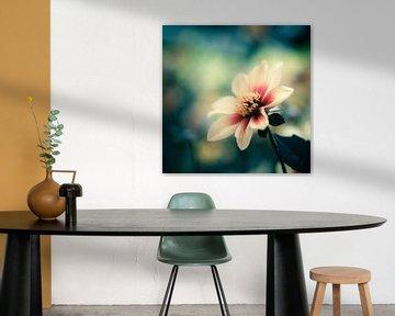 bloem  van Freddy Hoevers