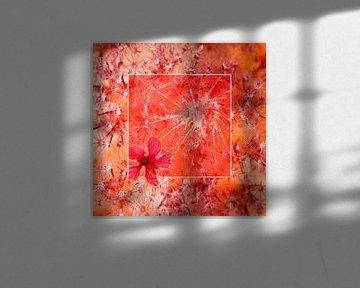 Rotes Quadrat von Dray van Beeck