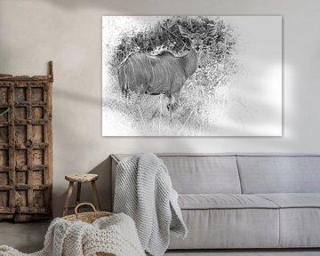 Kudu-Antilope in Südafrika. von Gunter Nuyts