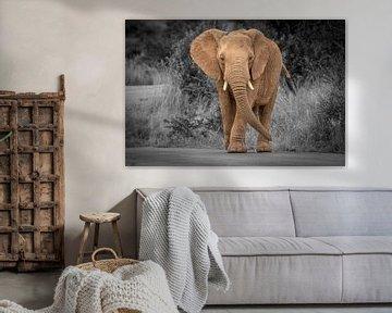 Olifant in Zuid-Afrika van Gunter Nuyts