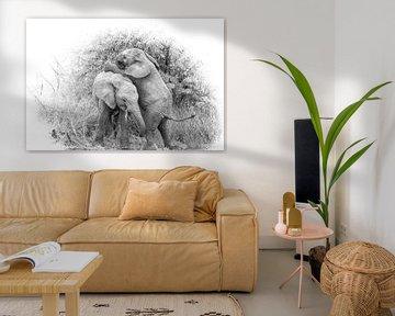 Miteinander spielende Elefantenbabys. von Gunter Nuyts
