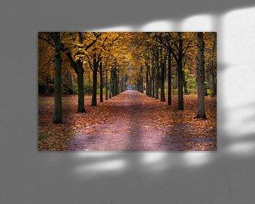 Sentier d'automne