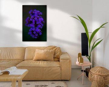 Blaue Blume von Frank Amez