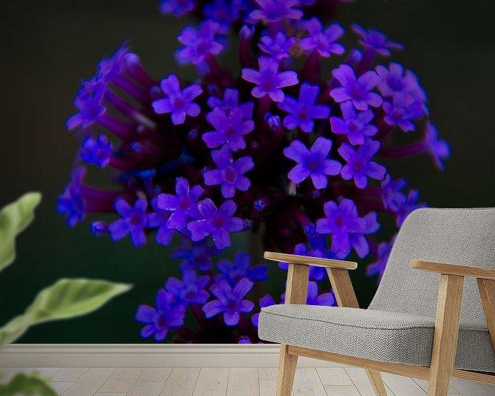 Beispiel fototapete: Blaue Blume von Frank Amez