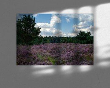Das violette Heidekraut auf der Weerterheide und ein blauer Himmel mit Wolken von J..M de Jong-Jansen