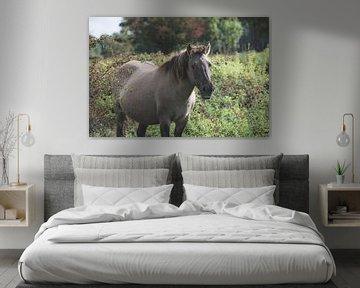 Konikpaard in het wild