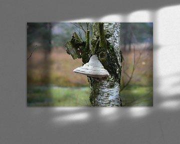 Baum Gesicht von Susanne Seidel