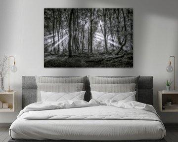 Zonnestralen van Niels Barto