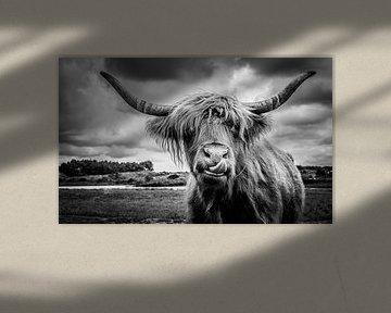 Schottischer Hochlandbewohner von Joost Lagerweij