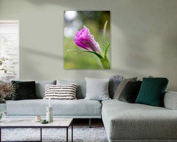 Mooi roze van Lianne van Dijk
