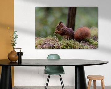 Eichhörnchen frisst einige Leckereien von Anjella Buckens