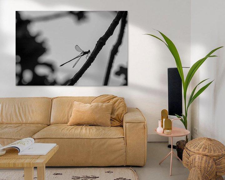 Beispiel: Libelle von Anjo ten Kate