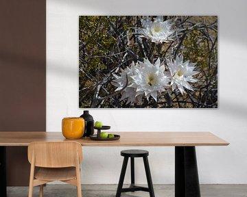 Blumen in der Wüste von Arizona von Bernard van Zwol