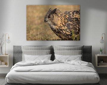 Europese oehoe